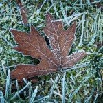 Tips On How To Prepare Your Lawn For Winter