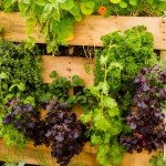8 Excellent Pallet Garden Ideas For Your Backyard